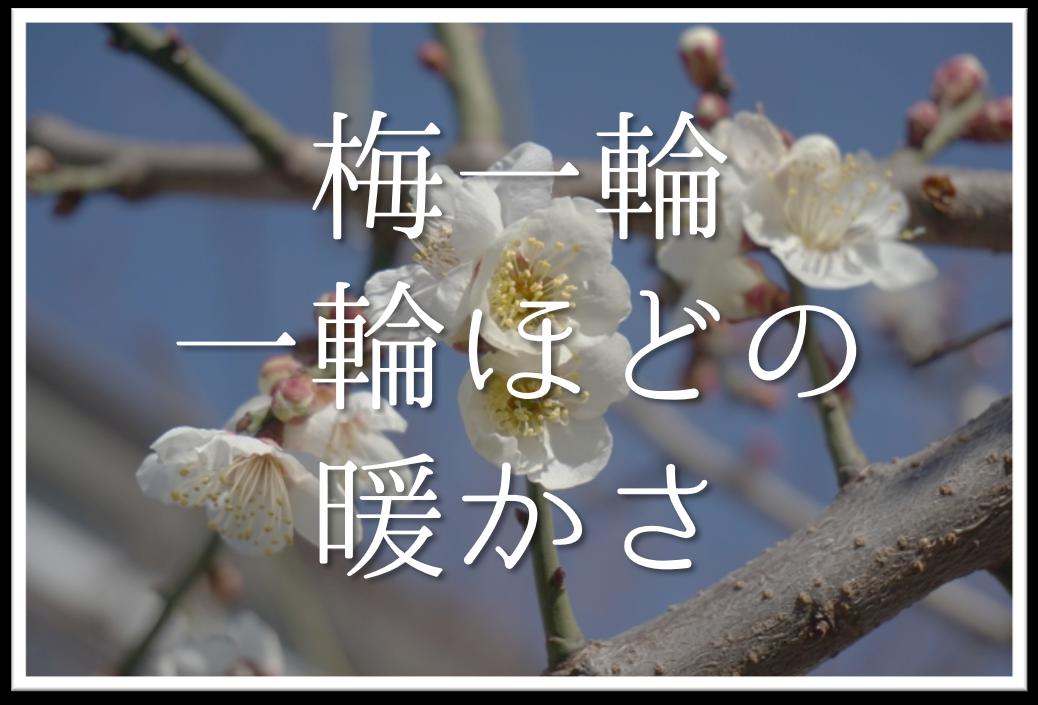 【梅一輪一輪ほどの暖かさ】俳句の季語や意味・感想・作者など徹底解説!!