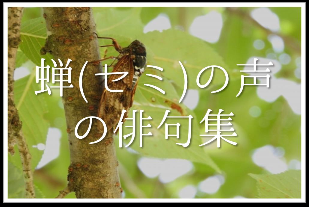 【蝉の声の俳句 30選】中学生向け!!季語を含んだおすすめ俳句作品を紹介!