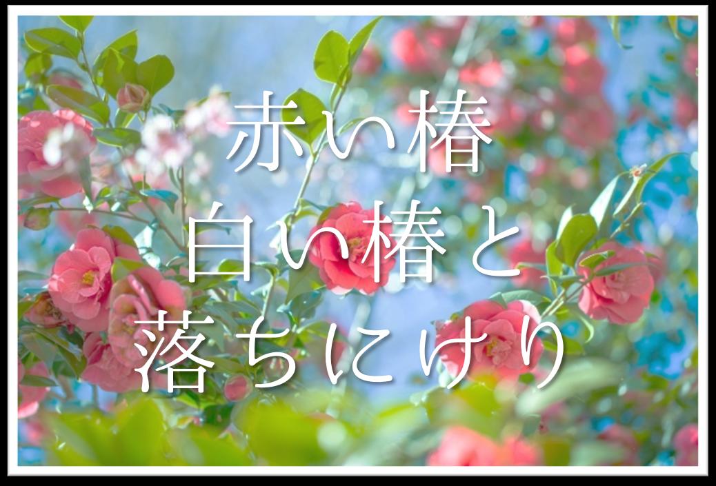 【赤い椿白い椿と落ちにけり】俳句の季語や意味・解釈・作者「河東碧梧桐」など徹底解説!!