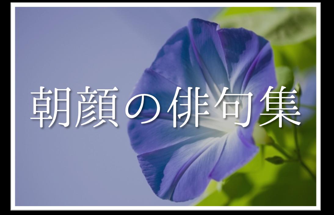 【朝顔の有名俳句 30選】すごく上手い!!季語を含んだおすすめ俳句作品集を紹介!