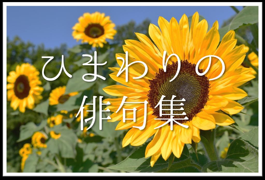 【ひまわりの俳句 30選】中学生向け!!季語「向日葵」を使った俳句作品集を紹介!