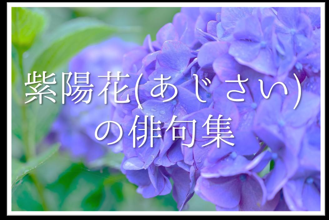 【紫陽花の俳句 30選】中学・高校生!!季語を含んだ有名句&おすすめ俳句作品集を紹介!