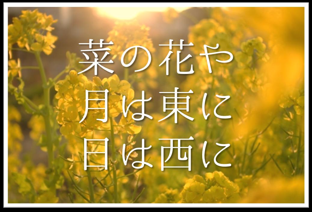 【菜の花や月は東に日は西に】俳句の季語や意味・表現技法・鑑賞文・作者など徹底解説!!