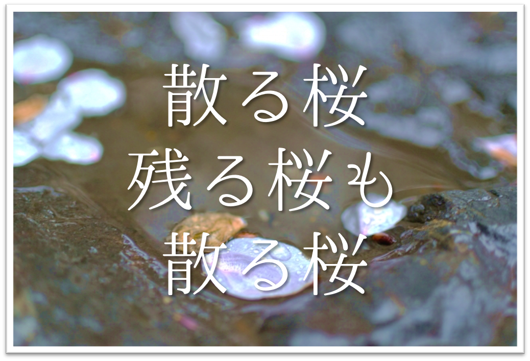 【散る桜残る桜も散る桜】特攻隊と関係する?俳句の季語や意味・作者「良寛」など徹底解説!!