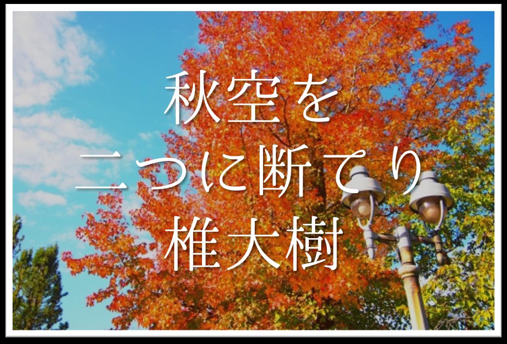 【秋空を二つに断てり椎大樹】俳句の季語や意味・表現技法・作者など徹底解説!!