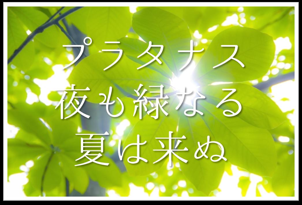 【プラタナス夜も緑なる夏は来ぬ】俳句の季語や意味・表現技法・鑑賞文・作者など徹底解説!!