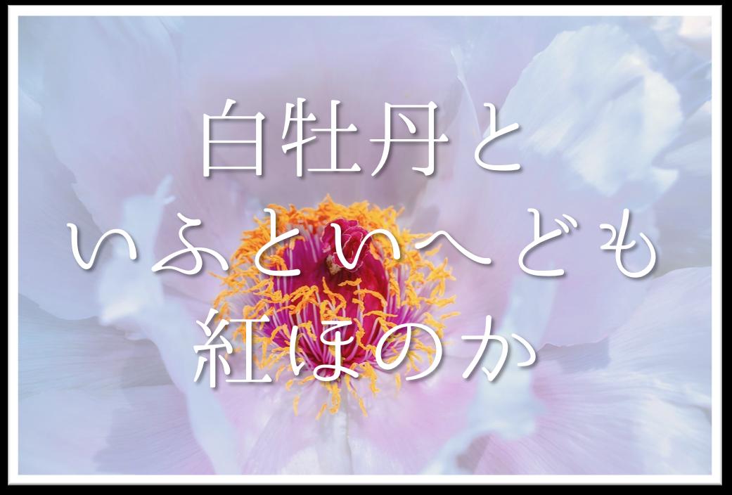 【白牡丹といふといへども紅ほのか】俳句の季語や意味・表現技法・鑑賞・作者など徹底解説!!