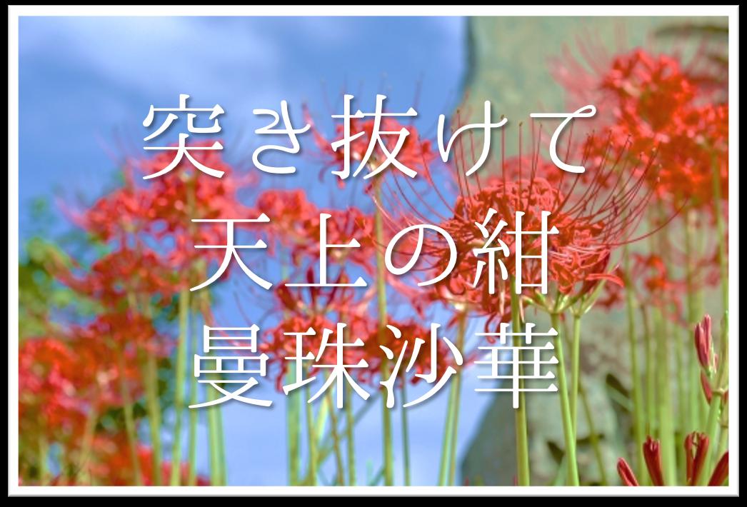 【突き抜けて天上の紺曼珠沙華】俳句の季語や意味・表現技法・鑑賞文・作者など徹底解説!!