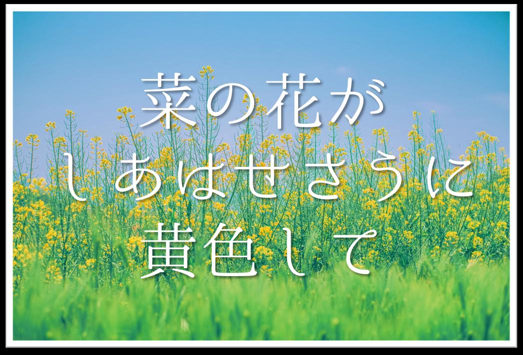 【菜の花がしあはせさうに黄色して】俳句の季語や意味・表現技法・解釈・鑑賞など徹底解説!!