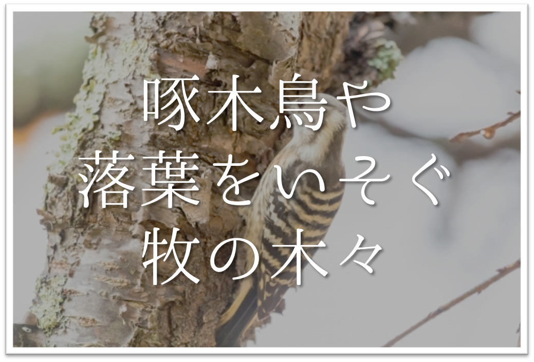 【啄木鳥や落葉をいそぐ牧の木々】俳句の季語や意味・技法・背景・作者など徹底解説!!