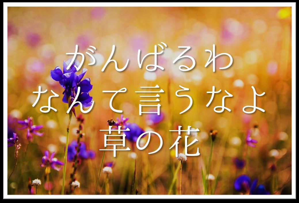 【がんばるわなんて言うなよ草の花】俳句の季語や意味・表現技法・鑑賞など徹底解説!!