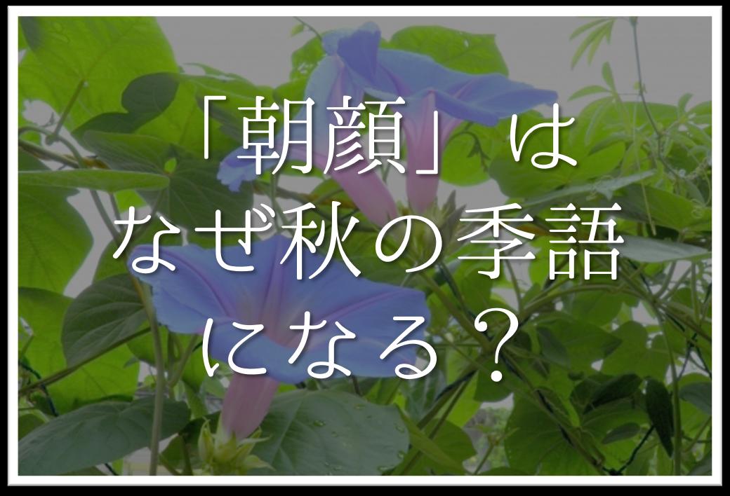 【俳句の季語「朝顔」はなぜ秋の季語になる?】簡単にわかりやすく解説します!