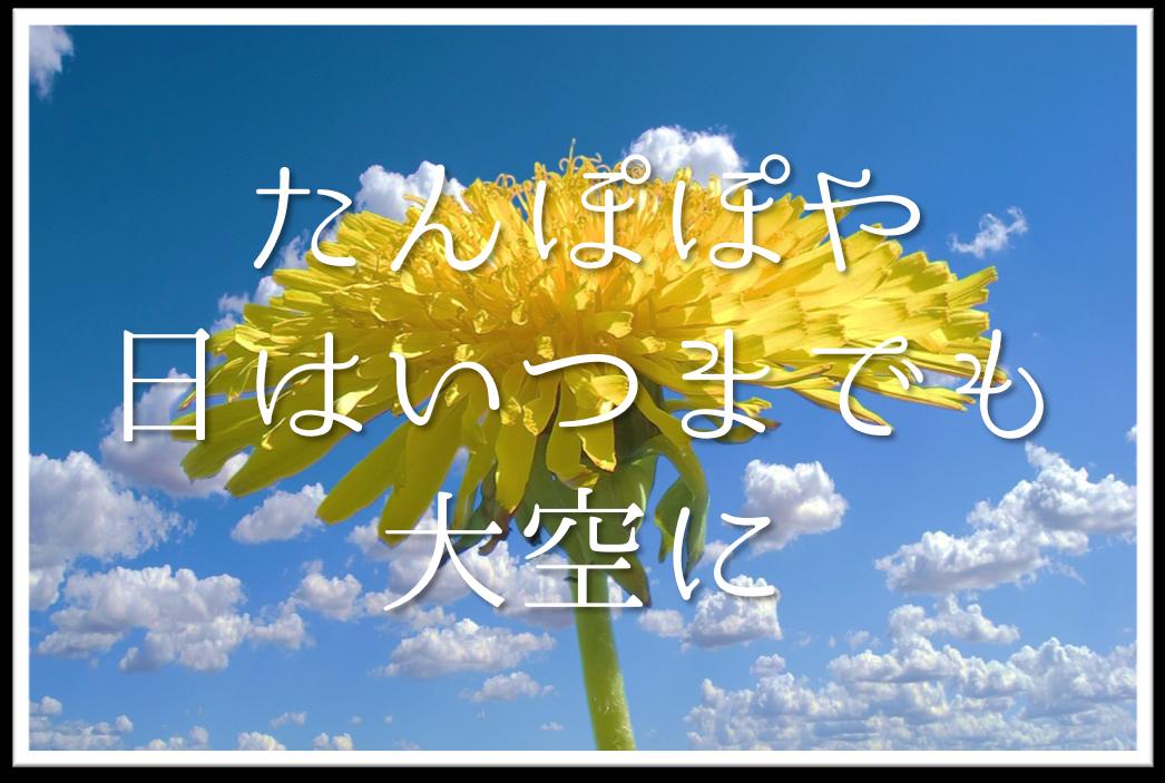 【たんぽぽや日はいつまでも大空に】俳句の季語や意味・表現技法・鑑賞文など徹底解説!!