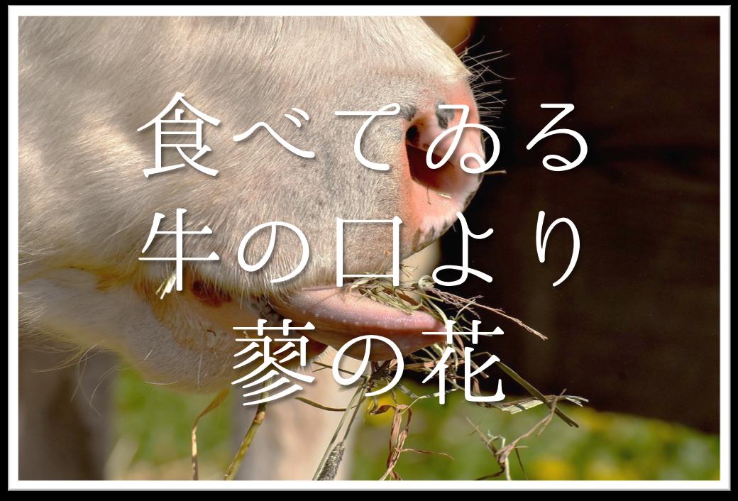 【食べてゐる牛の口より蓼の花】俳句の季語や意味・表現技法・鑑賞・作者など徹底解説!!