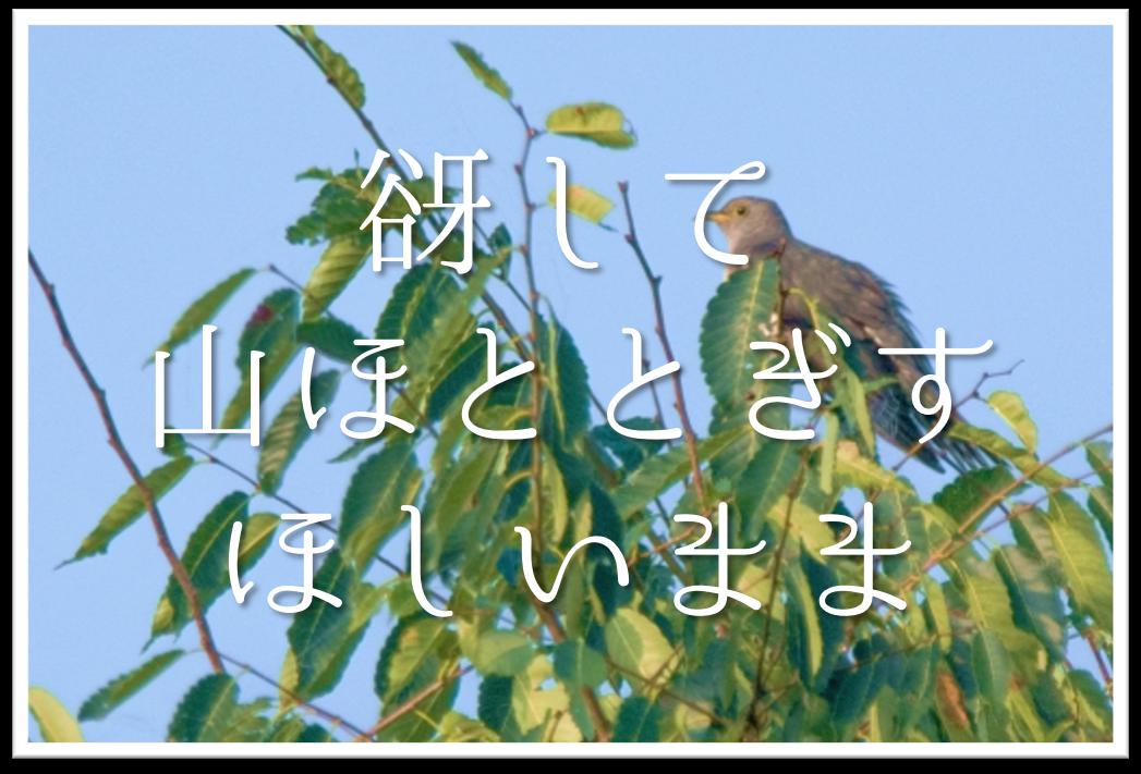 【谺して山ほととぎすほしいまま】俳句の季語や意味・鑑賞文・作者など徹底解説!!