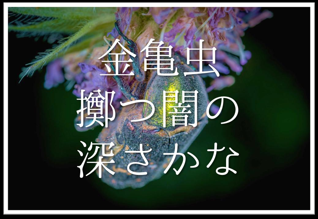 【金亀虫擲つ闇の深さかな】俳句の季語や意味・表現技法・鑑賞・作者など徹底解説!!