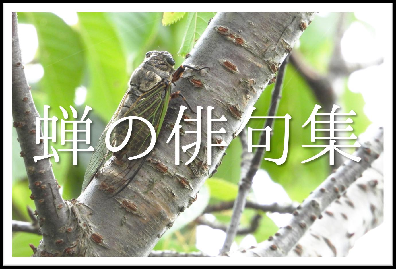 【蝉(せみ)の俳句 30選】小学生向け!!季語を含むおすすめ有名&素人俳句を紹介!