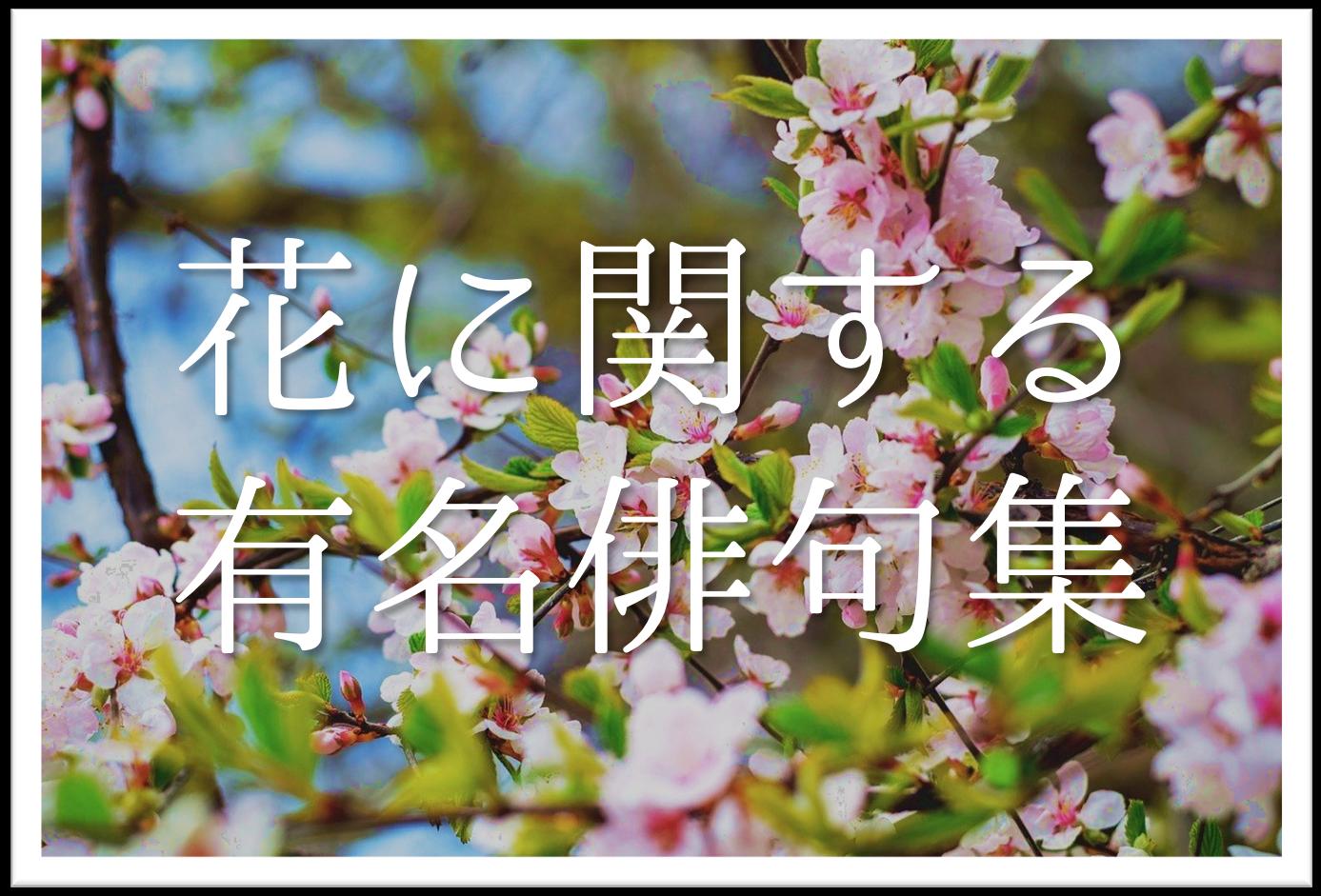 【花の有名俳句 30選】知っておきたい!!季語を含むおすすめ俳句を紹介!