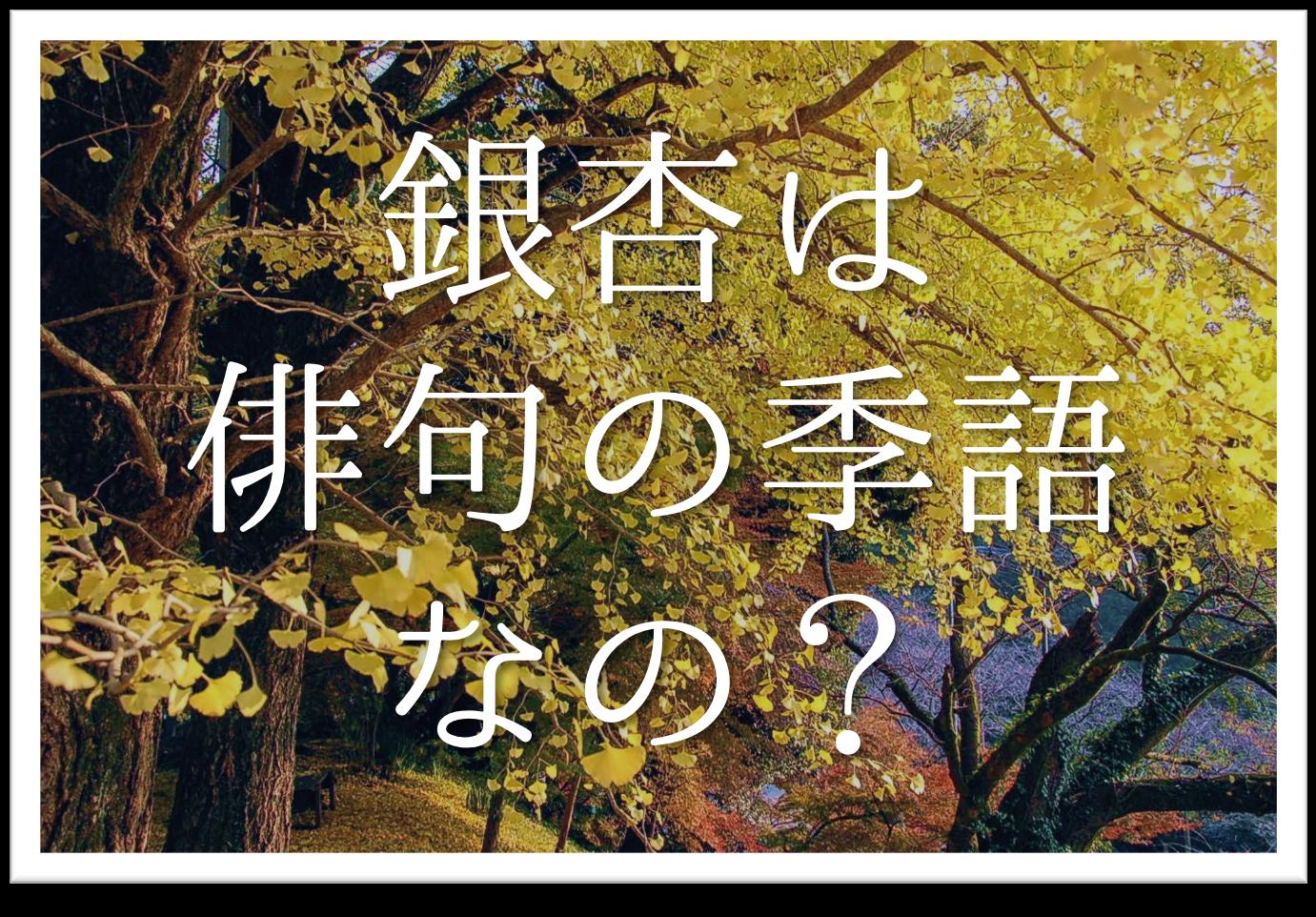 【銀杏は俳句の季語なのか?】簡単にわかりやすく解説!!いちょう•ぎんなん•大銀杏など