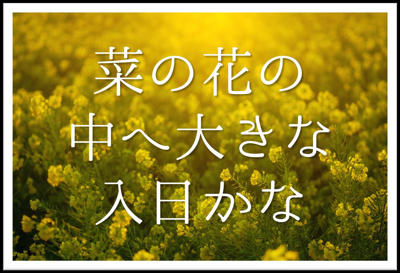 【菜の花の中へ大きな入日かな】俳句の季語や意味・表現技法・鑑賞・作者など徹底解説!!