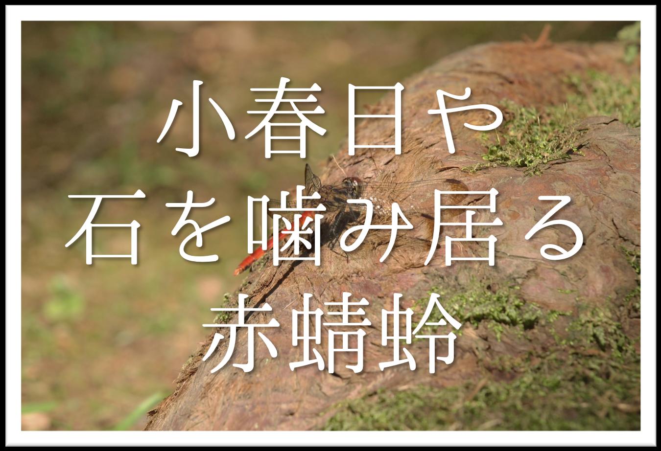 【小春日や石を噛み居る赤蜻蛉】俳句の季語や意味・表現技法・鑑賞など徹底解説!!