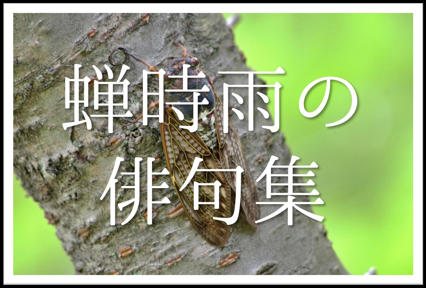 【蝉時雨の俳句 20選】知っておきたい!!季語を含むおすすめ有名&素人俳句を紹介!