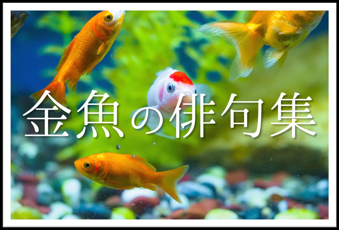 【金魚の俳句 20選】知っておきたい!!季語を含むおすすめ有名&素人俳句を紹介!