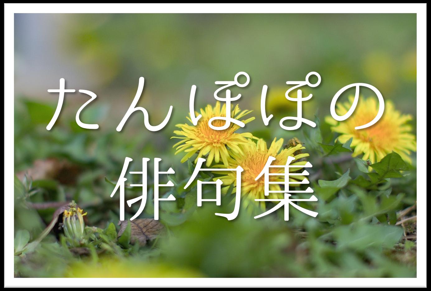 【たんぽぽの俳句 20選】知っておきたい!!季語を含むおすすめ有名&素人俳句を紹介