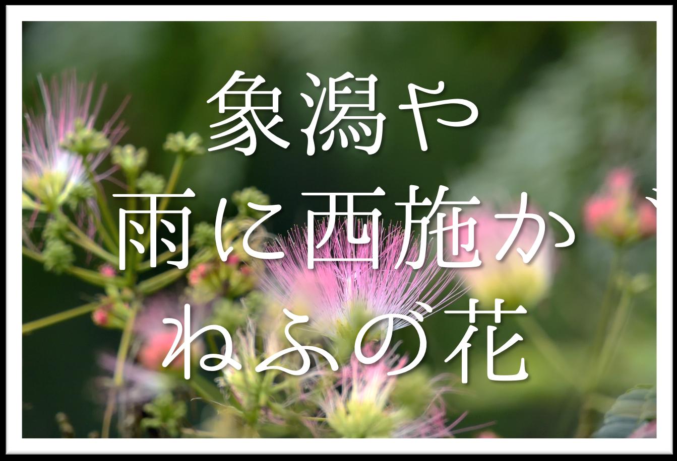 【象潟や雨に西施がねぶの花】俳句の季語や意味・表現技法・鑑賞・作者など徹底解説!!