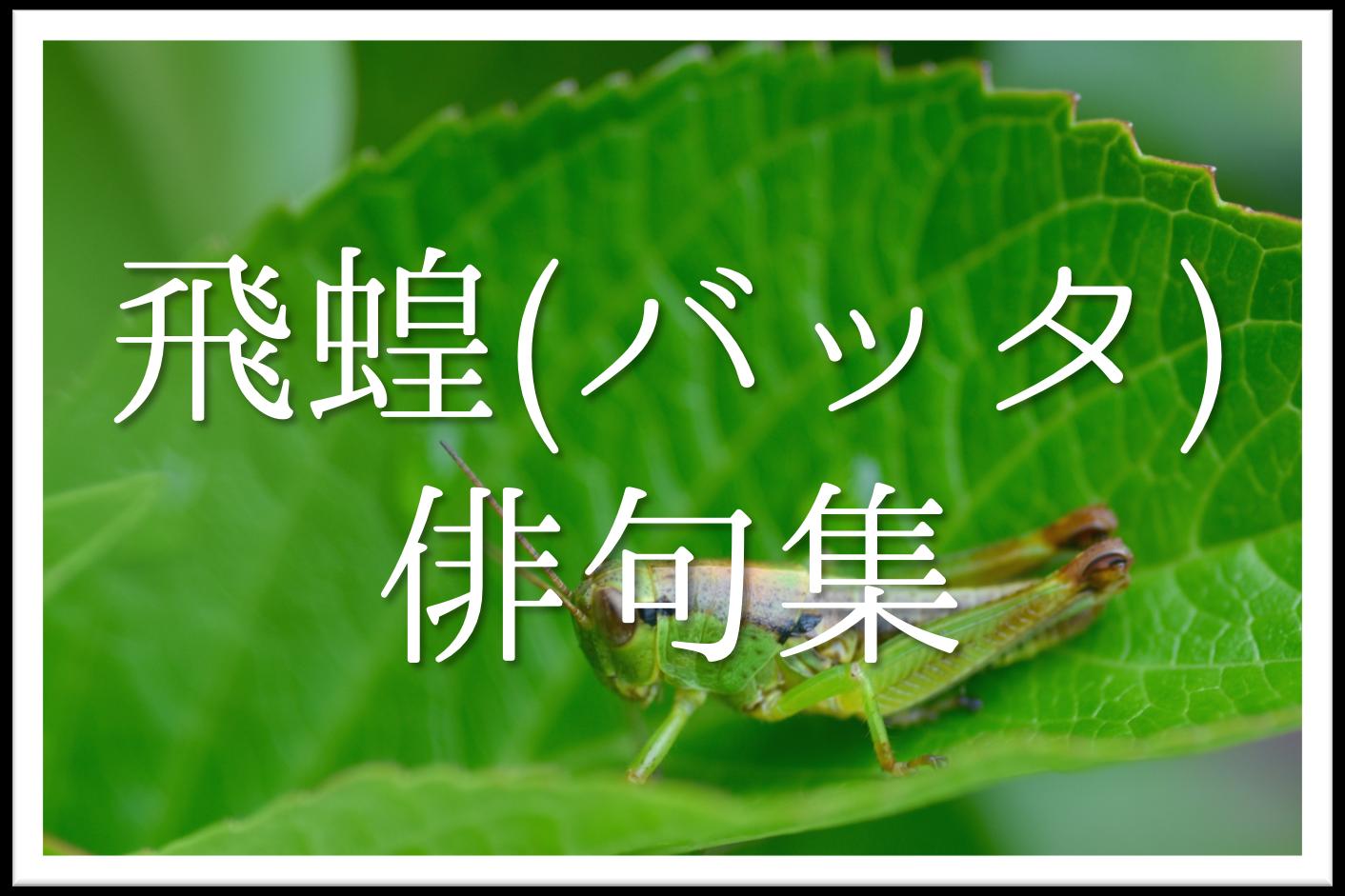 【飛蝗(ばった)の俳句 20選】知っておきたい!!季語を含むおすすめ有名&素人俳句を紹介!