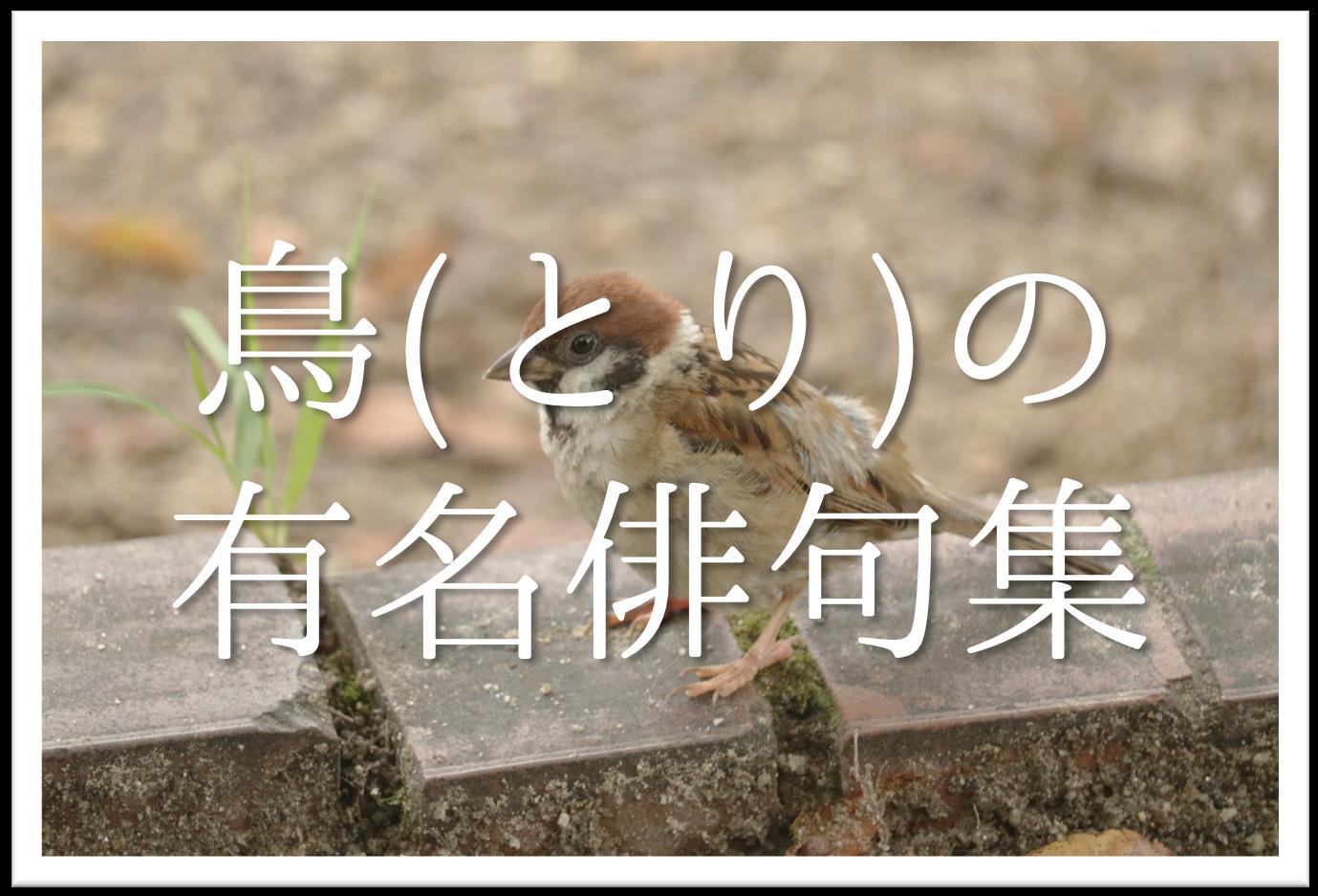 【鳥をテーマにした有名俳句 20選】春夏秋冬!!季語を含むおすすめ俳句を紹介!