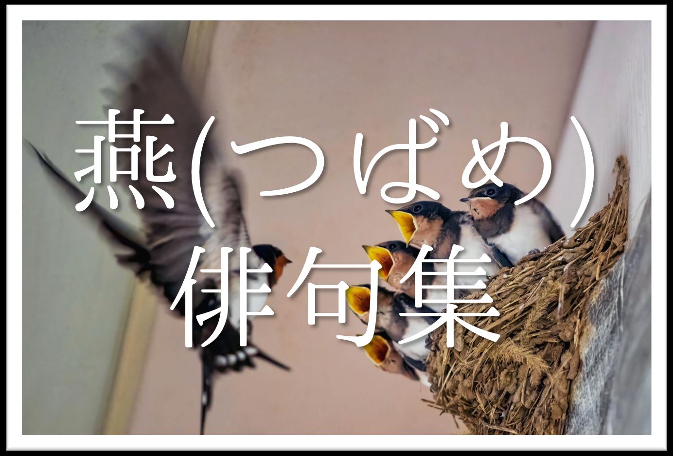 【燕(つばめ)の俳句 20選】知っておきたい!!季語を含むおすすめ有名&素人俳句を紹介