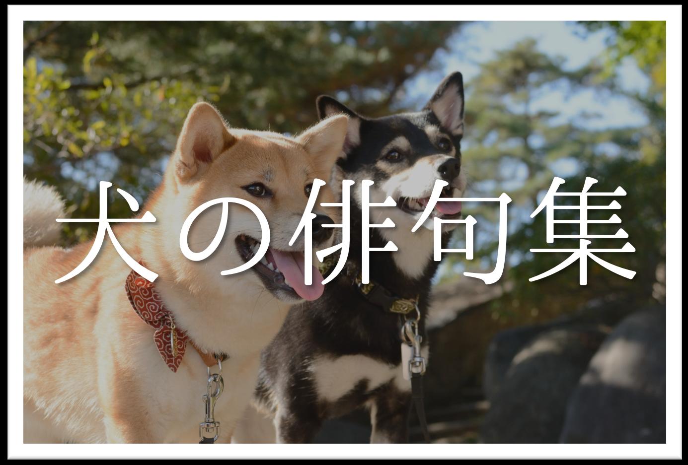 【犬をテーマに詠んだ俳句 20選】知っておきたい!!おすすめ有名&素人俳句を紹介!